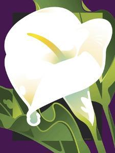 Calla Lily by David Chestnutt