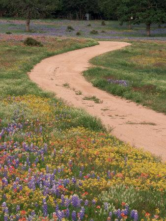 Dirt Road with Wildflowers, Texas