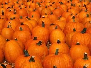 Pumpkins by David Davis