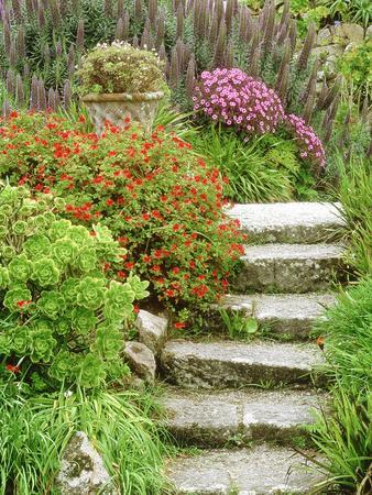 Stone Steps Leading to Middle Terrace, Geranium, Echium & Succulents, Isles of Scilly,