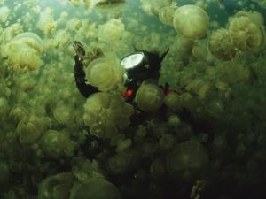 A Diver in a Lake Filled with Jellyfish by David Doubilet