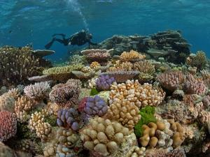 A Marine Scientist Admires a Garden of Stony Corals by David Doubilet