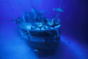 A Person on the Ray of Hope Shipwreck with Caribbean Reef Sharks, Carcharhinus Perezi, Circling by David Doubilet
