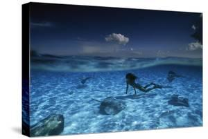 A woman swims with stingrays in clear water. by David Doubilet