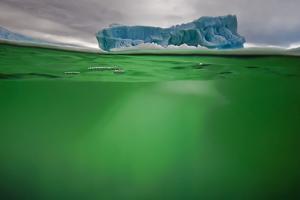 An Iceberg in Green Water Near Peterman Island by David Doubilet