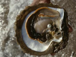 Cultured Pearl Grows in a Two-Year Old Oyster, Australia by David Doubilet