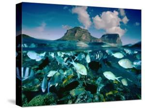 Damselfish and Sunset Wrasses Swim Above a Reef by David Doubilet