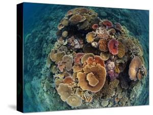 Hard Corals Vie for Space and Energy-Giving Sunlight Off Cairns by David Doubilet