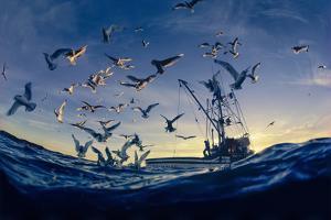 Seabirds Flock Near a Fishing Boat in the Gulf of Alaska by David Doubilet