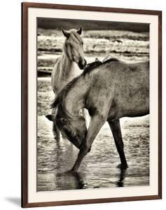 Beach Horses I by David Drost