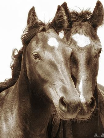 Horse Portrait III by David Drost