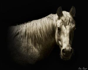 Horse Portrait VI by David Drost