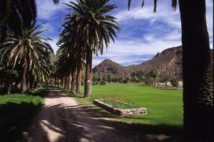 The Entry Road of Castle Hot Springs Is Lined with Palm Trees by David Edwards