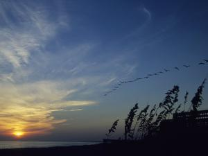 A Flock of Pelicans Soars Above a Beach at Sunset by David Evans