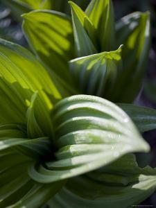 Close Up Shot of Indigenous Chinese Plants, Shennongjia, China by David Evans