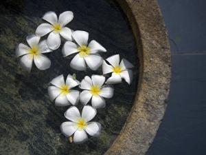 Jasmine Flowers Floating on the Water Surface in a Stone Vessel by David Evans