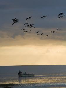 North Carolina Fishermen Cast Nets under Flock of Pelicans at Sunset by David Evans