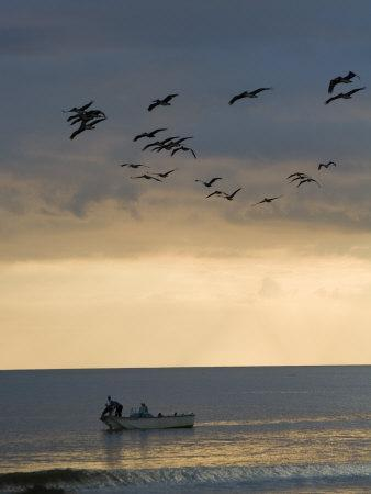 North Carolina Fishermen Cast Nets under Flock of Pelicans at Sunset