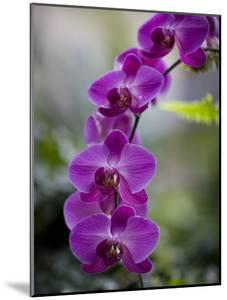 Purple Orchid at the Botanic Garden by David Evans
