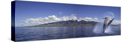 Breaching Humpback Whale (Megaptera Novaeangliae), Maui, Hawaii, USA, Digital Composite