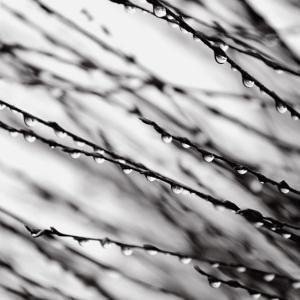 Jewel Drops by David Gray