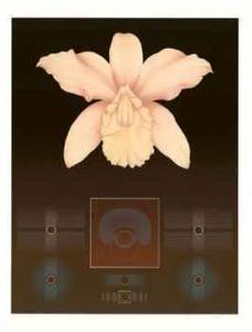 Orchid Matrix I by David Haiden