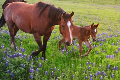 Horse on Bluebonnet Trail by David Hensley