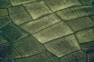 Aerial View of Rice Paddies in Sri Lanka by David Hiser