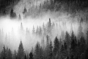 Fog Drifts Through a Coniferous and Aspen Forest Along Maroon Creek by David Hiser