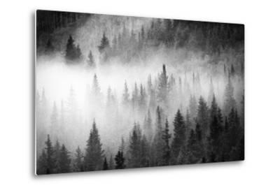 Fog Drifts Through a Coniferous and Aspen Forest Along Maroon Creek