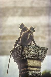 Gray or Hanuman Langurs Rest on Column Capital Near Ruvanveliseya Dagaba by David Hiser