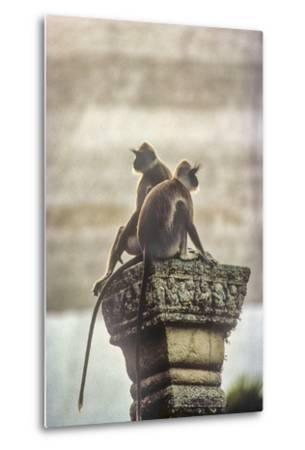 Gray or Hanuman Langurs Rest on Column Capital Near Ruvanveliseya Dagaba