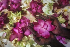 Hands Holding a Floral Offering During the Buddhist Poson Festival by David Hiser