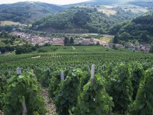 Beaujolais Vineyards, Beaujeau Village, Rhone Valley, France by David Hughes