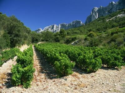 Cotes De Rhone Vineyards, Dentelles De Montmirail, Vaucluse, Provence, France, Europe by David Hughes