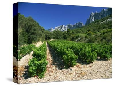 Cotes De Rhone Vineyards, Dentelles De Montmirail, Vaucluse, Provence, France, Europe