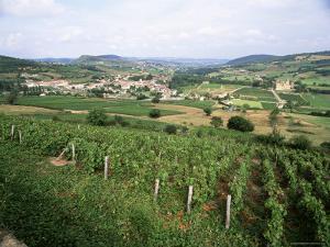 Maconnais Vineyards, Poilly Fuisse, Near Macon, Saone-Et-Loire, Burgundy, France by David Hughes