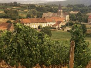 Maconnais Vineyards, Poilly Fuisse, Ozenay, Near Macon, Saone-Et-Loire, Burgundy, France by David Hughes