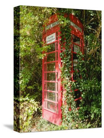 Overgrown Telephone Box, England, United Kingdom, Europe