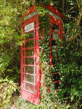 Overgrown Telephone Box, England, United Kingdom, Europe by David Hughes