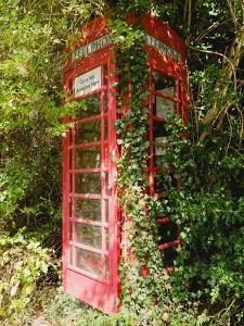 Overgrown Telephone Box, England, United Kingdom, Europe by David Hughes