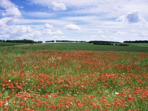 Poppies in the Valley of the Somme Near Mons, Nord-Picardy, France by David Hughes
