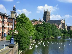 Swans on the River Severn and Cathedral, Worcester, Worcestershire, England, United Kingdom, Europe by David Hughes