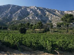 Vineyards and Montagne Ste. Victoire, Near Aix-En-Provence, Bouches-Du-Rhone, Provence, France by David Hughes