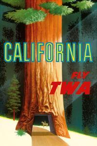 California Redwoods - TWA (Trans World Airlines) by David Klein