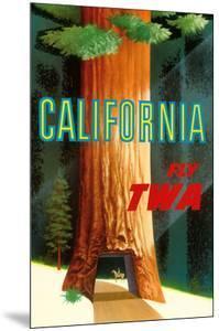 California Redwoods - TWA (Trans World Airlines) by David Klein
