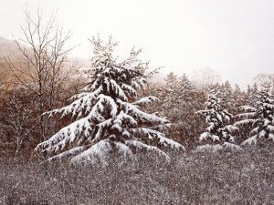 First Snow by David Knowlton