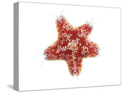 A Sea Starfish Collected from a Sample of Coral Reef