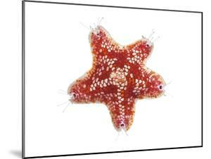 A Sea Starfish Collected from a Sample of Coral Reef by David Liittschwager