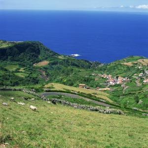 Cattle, Fields and Small Village on the Island of Flores in the Azores, Portugal, Atlantic, Europe by David Lomax